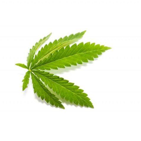 Male Cannabis