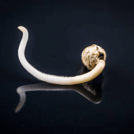 Materials Needed for Germinating Cannabis Seeds