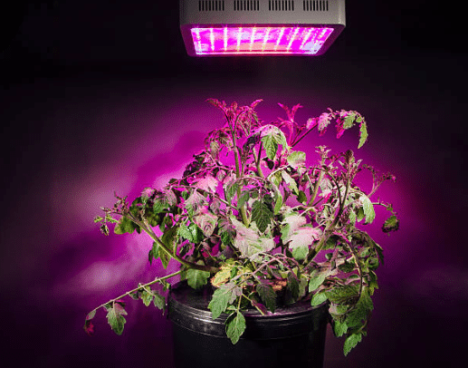 HPS vs LED Grow Light Showdown
