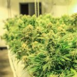 What is a Grow Room?