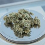 Should You Trust Budtenders?