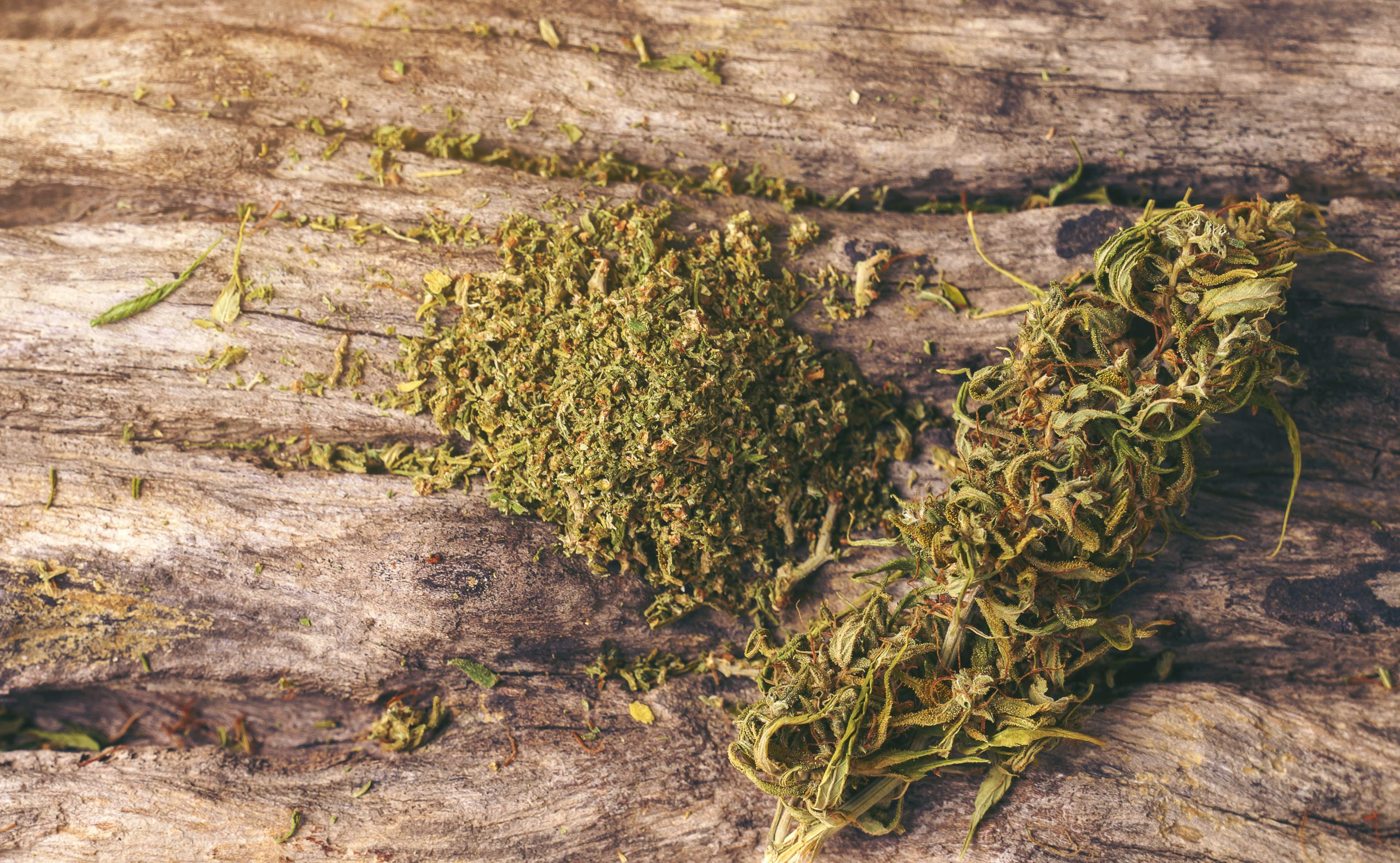 Cannabis Frequently Asked Questions